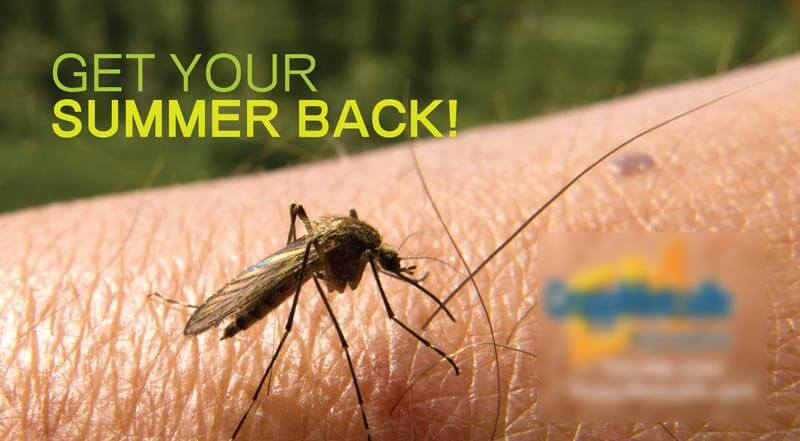 Cropp-Metcalfe_mosquitocard_Jun-13_front